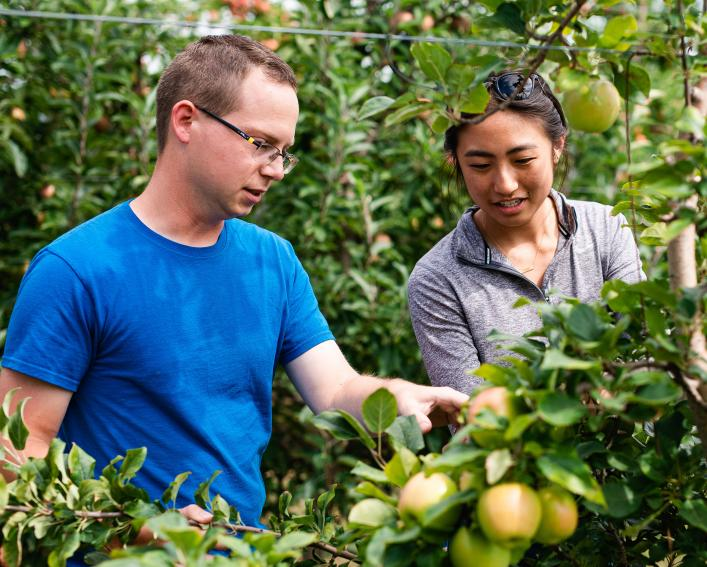 Male and female graduate students examine apples for disease.