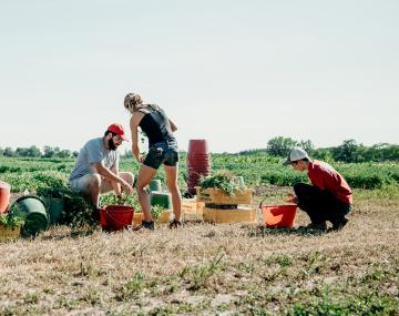 People working in a crop field.