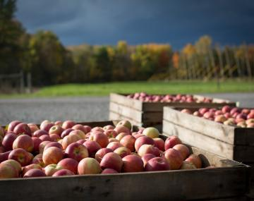 Apples in Hudson Valley
