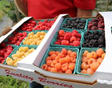 Assorted colors of berries.
