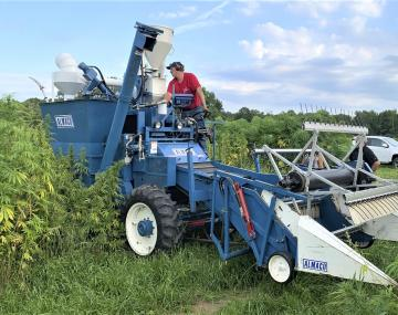 people driving a hemp harvester in the field