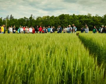 Farmer field day group looking at field of barley.