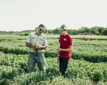 Older man shows pea vines to youth in pea field