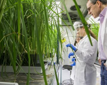 students looking at rice plants