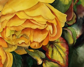 Watercolor painting detail of yellow rose.