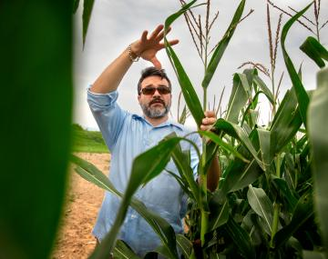 man standing with arm raised in a field of maize