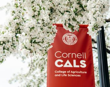 CALS banner surrounding by cherry blossoms