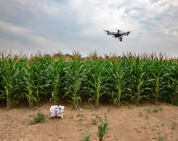 two drones in a corn field
