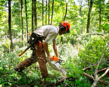 Man cuts down trees in forest