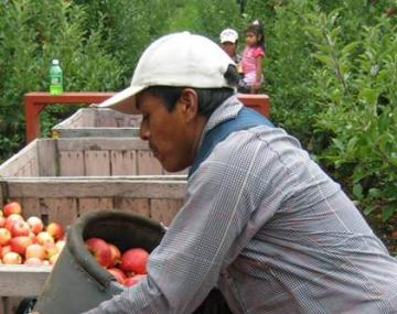 Farmer collects apples