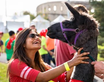 A student pets a llama at the Big Red Fan Festival.
